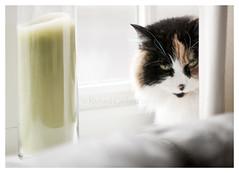 Mavis - hiding (Rich3591) Tags: cat geotagged curtain hampshire sleepy windowsill mavis hikey challengeyouwinner makinon135mm justpentax pentaxk20d gettyimagesuklocation geo:lat=50902811 geo:lon=1076237