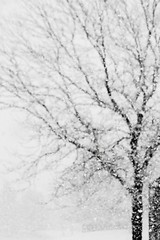White Tuesday (provincijalka) Tags: snow storm motion blur cold tree naked drive big soft slow branches january fluffy monochromatic falling saltlakecity curly blank single commute flakes whiteout branchingout notbychoice whitetuesday intonothing provincijalka