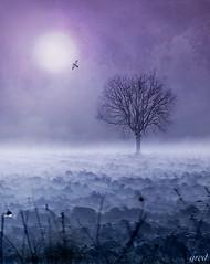 Purple tree (gred.) Tags: trees light lightpainting tree birds misty fog landscape mood loneliness purple magic silvio paesaggi umbria controluce politic aporia digitalphotoart thesecretlifeoftrees saariysqualitypictures altrafotografia magicunicornverybest