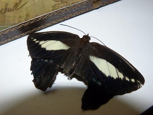 JANEIRO 2011 621a