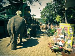 Слоны идут!