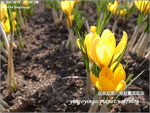 台中后里_中社光觀花市20110130_R0017647