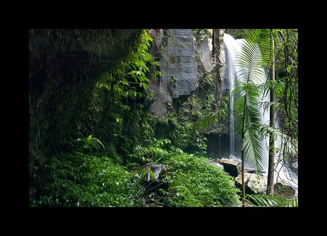 Rain forest C&C please