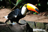 Bird park Foz do Iguacu