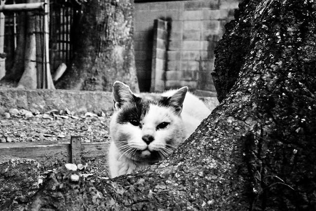 Today's Cat@2011-01-31
