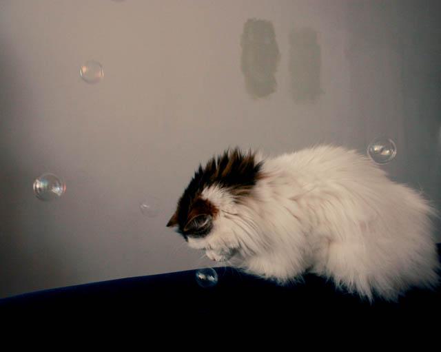 lou lou bubbles k
