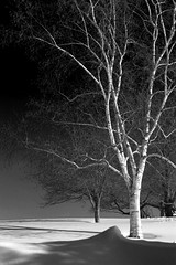 Winter Trees (mjmalone54) Tags: park trees shadow sky blackandwhite snow canon photo massachusetts birch brookline blackwhitephotos tripleniceshot mygearandme mygearandmepremium mygearandmebronze mygearandmesilver mygearandmegold artistoftheyearlevel3 larsandersenpark artistoftheyearlevel4
