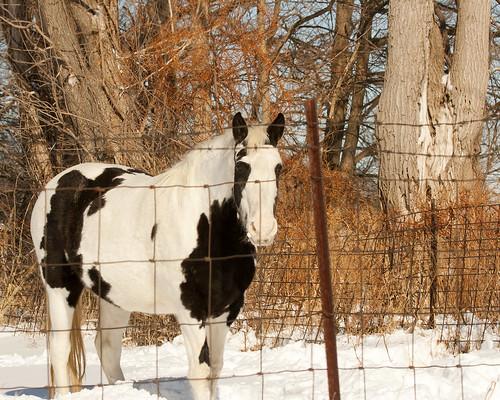 HorseEmiquonPrairieRoad02032011JGWard_MG_1609
