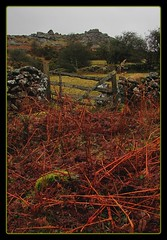 Bracken view to Bell Tor (Dazzygidds) Tags: uk england walking devon lichen dartmoor widecombeinthemoor dartmoornationalpark graniteoutcrops mossytrees twomoorsway thewestcountry bonehillrocks cafeonthegreen britishnationalparks chinkwelltor honeybagtor b3387 bonehillvillage