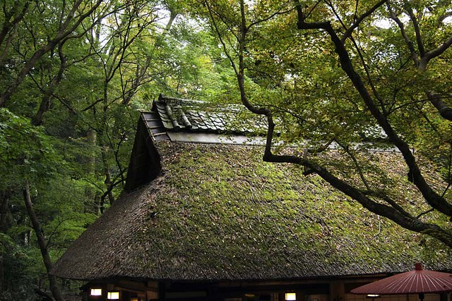101113_143154_奈良公園_水谷茶屋