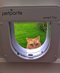 I'm not coming in til I get more sweets! (Mrs eNil) Tags: cat ginger kitten martha kitty flap microchip gingercat iphone catdoor catflap orangekitty lauraohalloran microchipcatflap flapofdoom