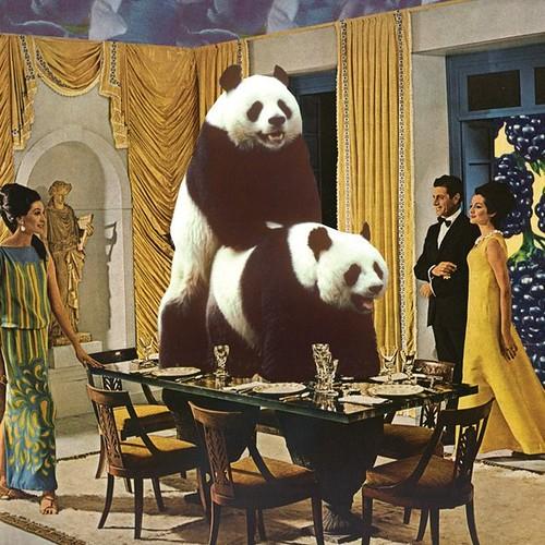 onecreativegirl the problem with pandas drollgirl