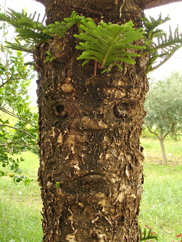 Tree With Face U0026quot;grumpyu0026quot; (freemindarella) Tags: Tree Grumpy Baum  Baumrinde