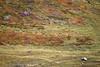 Autumnal Patchwork (storvandre) Tags: travel sky plants alps nature canon landscape eos 7d courmayeur alpi reportage valledaosta eos7d storvandre