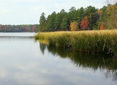 Tyler State ParK in fall