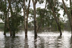 loxton04 (eyesofmark) Tags: sunset river southaustralia murray loxton riverland barmera renmark lakebonney