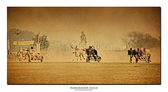 Three in a ROW (Harvarinder Singh) Tags: punjab ludhiana kilaraipur ruralgames villagegames bullockcartracing kilaraipurgames harvarindersinghphotography harvarindersingh