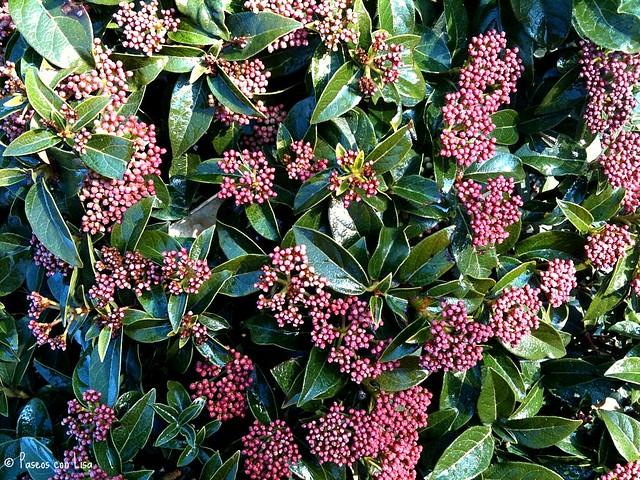 (293) ¿Sabéis cómo se llama este arbusto? ¡Yo no!