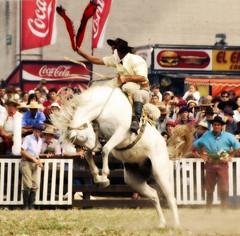 El tordillo (Eduardo Amorim) Tags: horses horse southamerica caballo uruguay cheval caballos cavalos prado montevideo pferde cavalli cavallo cavalo gauchos pferd hest hevonen chevaux gaucho  amricadosul montevidu hst uruguai gacho  amriquedusud  gachos  sudamrica suramrica amricadelsur  sdamerika jineteada   americadelsud gineteada  americameridionale semanacriolla semanacriolladelprado eduardoamorim iayayam yamaiay semanacriolladelprado2010