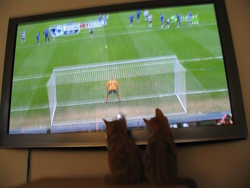 Katt TV