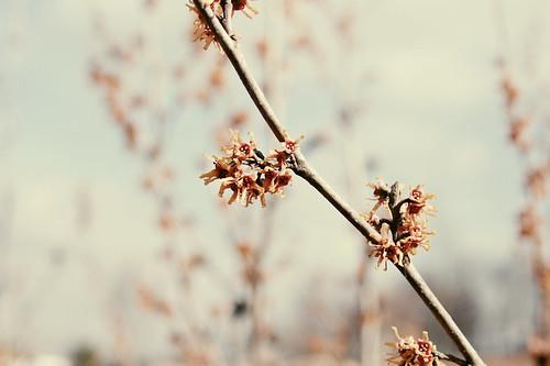 nature010