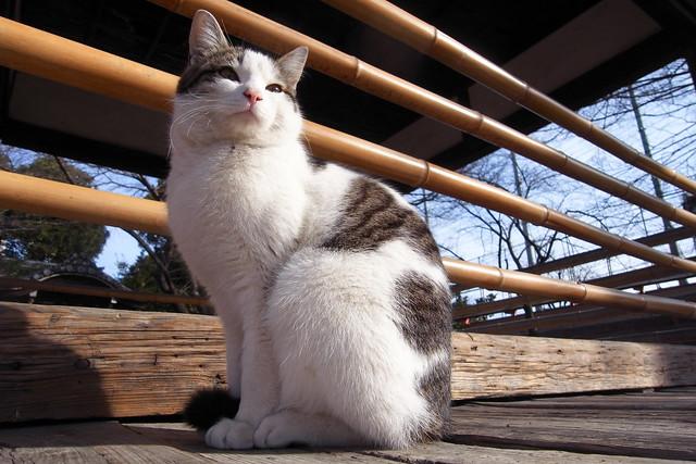 Today's Cat@2011-02-20
