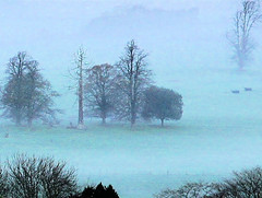 fog in the vale (algo) Tags: trees england misty fog searchthebest valley algo aylesburyvale
