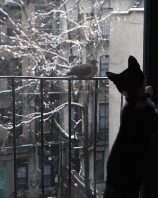 kitten & bird