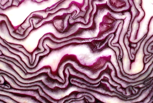red cabbage/punane kapsas