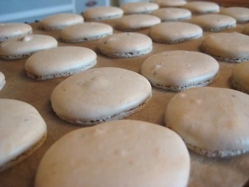 2011-02-13 cookies 025