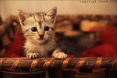 Cat ..  (  | Alaa AL-Ghofaily) Tags:   d90