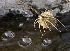 ~~Les bulles magiques...~~ (Jolisa) Tags: nature water nikon eau ru cascade reflets bulles chardon ruisseau reflecto croquenature