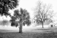 Winter Palmetto (Sco C. Hansen) Tags: barn south low country southern pecantree beaufortcounty palmettotree coosaw stockphotoagency photostockagency