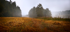 Panorama field autumn mist (czdistagon.com) Tags: life morning autumn wild summer panorama sunlight mist plant abstract color macro reflection green nature wet water ecology beauty field grass rain weather closeup zeiss river landscape outdoors leaf spring woods shiny waterdrop bright outdoor background lawn meadow environmental drop fresh clear contax growth sphere dew bubble droplet environment condensation cz lush liquid volga raindrop textured freshness 3514 distagon carlzzeiss aleksandrmatveev doublyniceshot czcontaxdistagon3514 czdistagon czdistagoncom