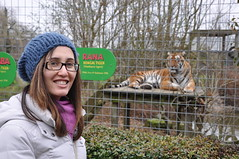 Chuffed there's a tiger!