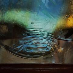 Abraham Sutzkever: Griner Akwarium ~ Grnes Aquarium --- Water Mirror - Wasser Spiegel --- Aktion: Glas Wrfel Wasser ~ Glas Cube Water (hedbavny) Tags: vienna wien blue autumn winter summer plant reflection green art water glass studio austria mirror sketch sterreich spring wasser underwater sommer spiegel kunst diary herbst jahreszeit pflanze sketchbook september note cube mementomori grn blau rotten transition root decomposition spiegelung tagebuch glas wrfel glaswrfel aktion frhling wurzel atelier vanitas unterwasser werkstatt undine verfall verwelkt skizze notiz arbeitsraum melancholie radix wasserpflanze wasserspiegel skizzenbuch bergang wienvienna maigrn sterreichaustria scheintod cmwdblue transitio hedbavny ingridhedbavny aktionisums