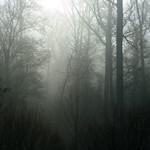 morning trees thumbnail