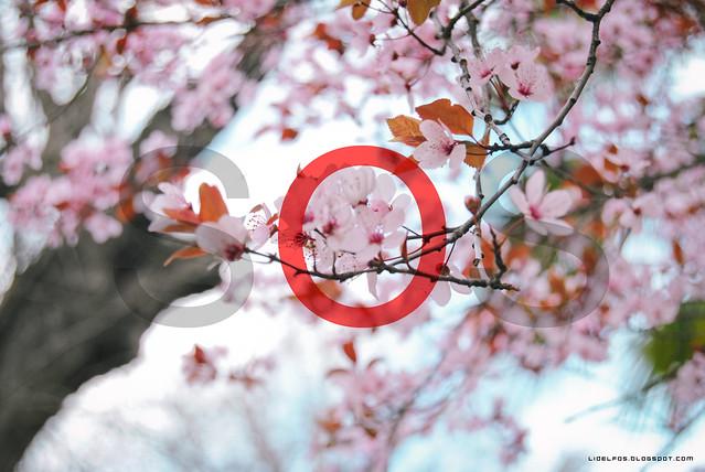 Sakura need help