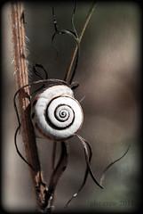 snail (PheCrew) Tags: roma macro texture closeup photoshop snail retouch remake chiocciola phe soken