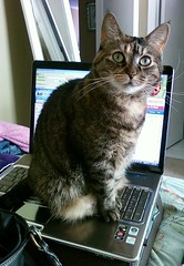 Jadee is taking over! (Cassi J) Tags: cats phone laptop picture cell jadee