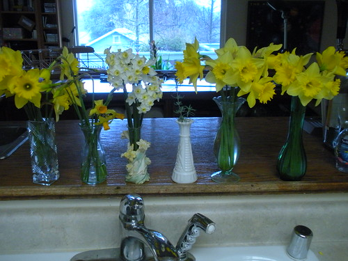 Spring Bulbs on my sill