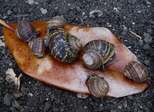 5. Snails!