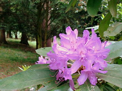 DSC02194 (AndieG87) Tags: flower zoo purple sony howletts dsch3