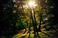 Till the sun comes back around.. (renkata23) Tags: trees silhouette landscape nature sun sunlight sunrays tones colors colorful nikon nikonbulgaria outdoor mood