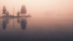 misty island, sunrise (Florian Grundstein) Tags: sky lake water mirror reflections morning early fog mistiy landscape seascape widescreen wallpaper rough trees nature hike hiking upperpalatinate bavaria germany oberpfalz heimat daheim unusual see himmel nebel morgens sonnenaufgang sunrise sunset light nikon fx d610 nikkor outdoor minimalismus tamron 1530vc grundstein florian