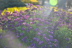 DSC_0024 (Rinswid) Tags: feldman ecopark park nature flowers