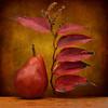 Autumn Red (njk1951) Tags: pear leaves red squareformat goldenlight autumn autumnleaves redpear richcolors golden stilllife