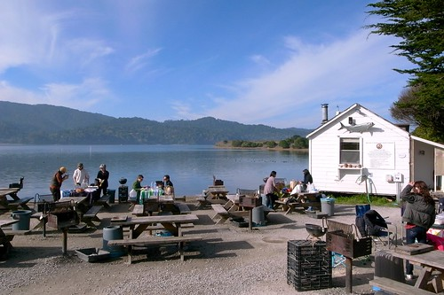 Tomales Bay Oyster BBQ