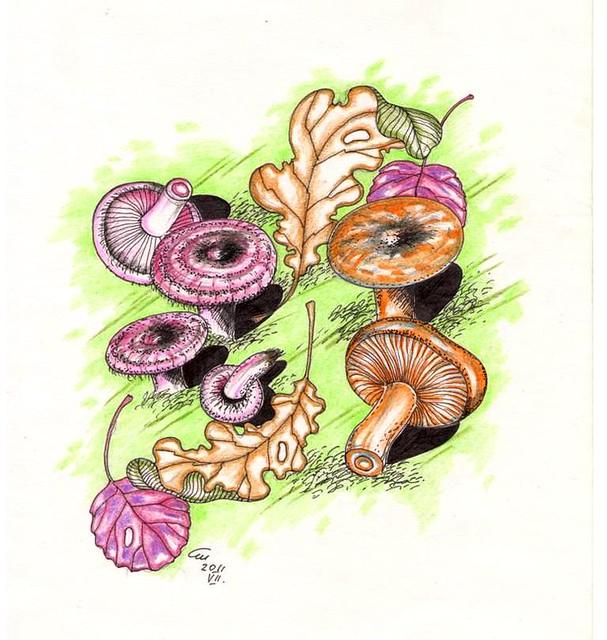 Волнушки и рыжики