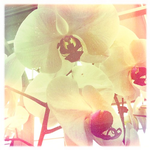 Hipstamatic Orchids